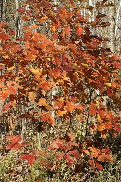 Couleurs d'automne le long de la rivière Saint-Charles à Québec (Canada) | Faaxaal Forum Photos gratuite Faune et Flore | Scoop.it