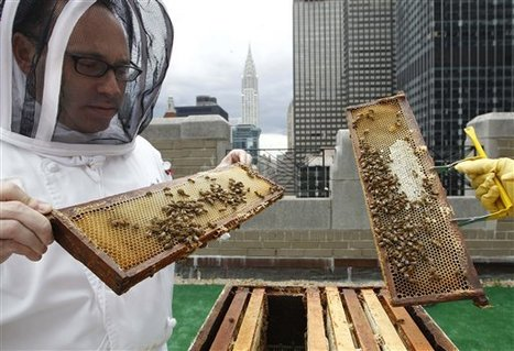 Posh hotels are buzzing with tiny new guests: bees | Share Some Love Today | Scoop.it