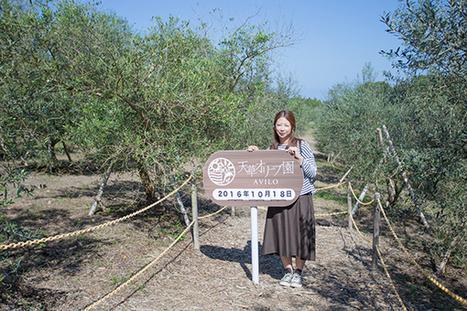 オリーブの島・天草で、最上級のオリーブを見て、搾って、テイスティング! 観光・旅行情報サイト【ぐるたび】 | Olive News Japan | Scoop.it