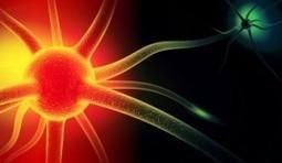La Neurociencia del Liderazgo | Neurociencias y educación | Scoop.it