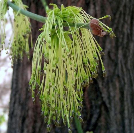 Árboles con alma | Recursos de Botánica para Secundaria | Scoop.it