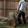 DV Tree Service II Co