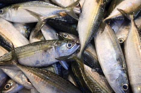 La production aquacole mondiale va surpasser la pêche | Pisciculture - Aquaculture | Scoop.it