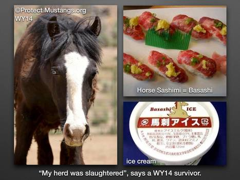 Help wild horses rescued back from the slaughterhouse stay in sanctuary | Our Evolving Earth | Scoop.it