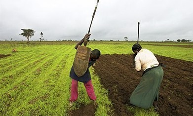 Small-scale agriculture holds big promise for Africa | Development Economics | Scoop.it
