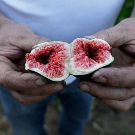 PAN la nouvelle revue de l'esprit paysan | Fruits, légumes de saison et circuit court | Scoop.it