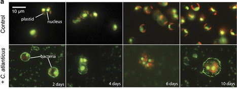 The ISME Journal - Ubiquitous marine bacterium inhibits diatom cell division | Interaction, and more... | Scoop.it