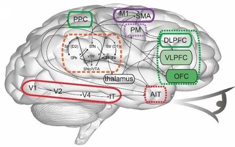 Waterloo researchers create 'world's largest functioning model of the brain' | KurzweilAI | anti dogmanti | Scoop.it