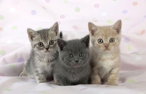 Russie: Les huissiers menacent de saisir les chats des mauvais payeurs | Les chats c'est pas que des connards | Scoop.it