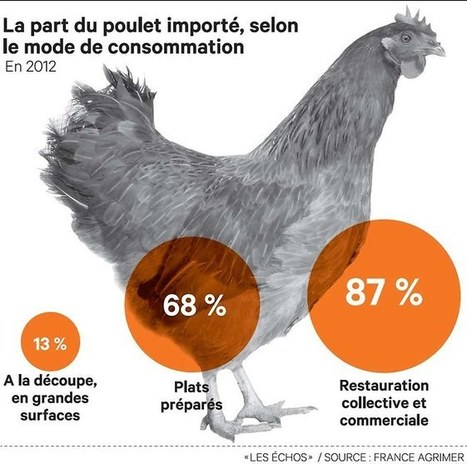 La volaille française tente de s'imposer dans la restauration - Les Echos | Le Fil @gricole | Scoop.it