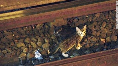 Kittens risk all nine lives in subway caper | Feline Health and News - manhattancats.com | Scoop.it