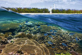 Coral society - Sydney Morning Herald   Luxury Self-Contained Accommodation in Airlie Beach   Scoop.it