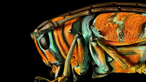 You've Never Seen Insect Portraits Like These | AP HUMAN GEOGRAPHY DIGITAL  STUDY: MIKE BUSARELLO | Scoop.it