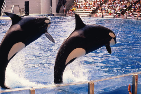 SeaWorld's Sister Company Fights Whale and Dolphin Captivity | Oceans and Wildlife | Scoop.it