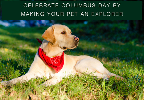 Columbus Day Deals On Pet Supplies With Discounts – Enjoy Leisure With Pets | BestVetCare | Pet Care | Scoop.it
