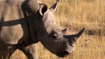 Rhino poaching mastermind denied bail | What's Happening to Africa's Rhino? | Scoop.it