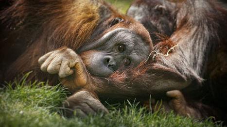 La planète va mal d'après le dernier rapport du WWF | Planete DDurable | Scoop.it