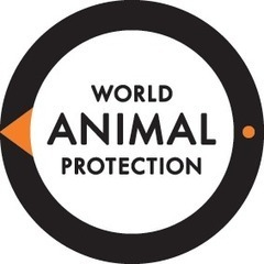 Wildlife. Not entertainers | Australia World Animal Protection | Nature Animals humankind | Scoop.it
