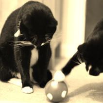 Cat Psychology   Pets   Scoop.it
