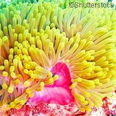 Une étude se penche sur les parasites aquatiques des poissons | Toxique, soyons vigilant ! | Scoop.it
