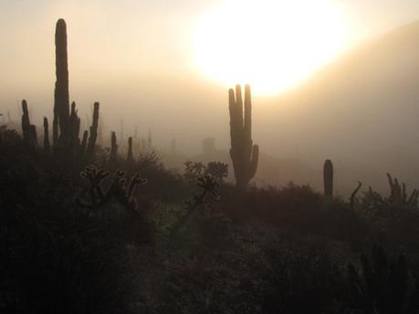 Drosophila pachea : « Jamais sans mon cactus ! »   EntomoNews   Scoop.it