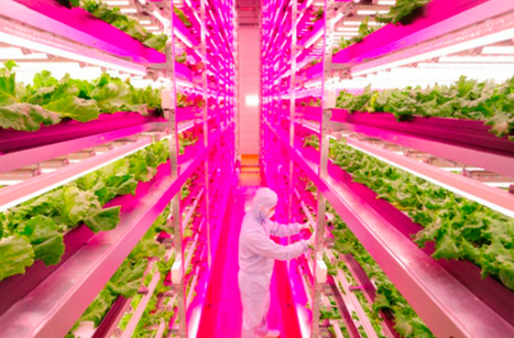 World's First 'Robot Run' Farm to Open : DNews | Transition Point! | Scoop.it