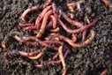 1.9 Million Worms Chomp Down Airport Waste in North Carolina | Urban Greens Watch | Scoop.it