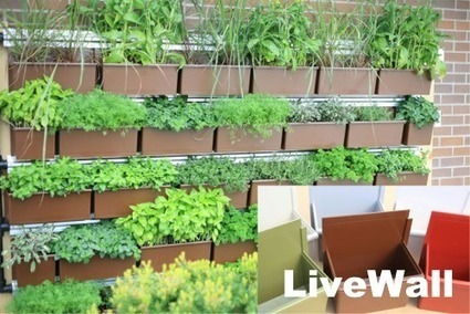 Introducing LiveWall®: New Planted Wall System Achieves Simplicity and ... - Greenroofs.com | Vertical Farm - Food Factory | Scoop.it