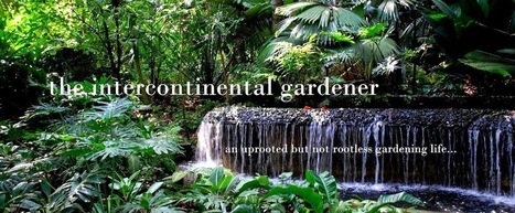 The Intercontinental Gardener: Sian Teck Tng Vegetarian Convent, a remnant of a lost world | Singapore Memories and History | Scoop.it