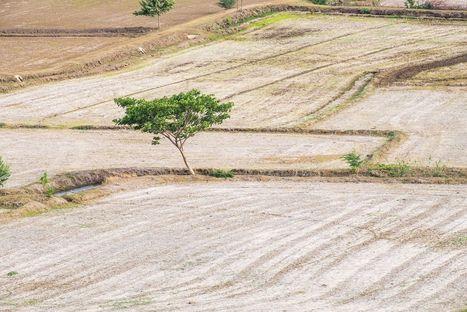 La pire sécheresse depuis 900 ans en cause dans les conflits du Moyen-Orient | Acteurs de la transition énergétique | Scoop.it