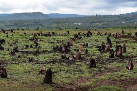 La tasa de deforestación en el país aumentó 16%   Regiones y territorios de Colombia   Scoop.it