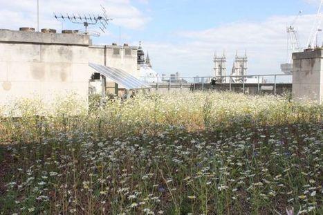 Sur les toits du monde - La biodiversité pour les insectes du 55 Broadway, Londres | biodiversité en milieu urbain | Scoop.it