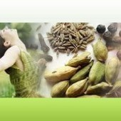 Best Ayurvedic Remedies for Piles Pain | Ayurvedic Treatments | Scoop.it