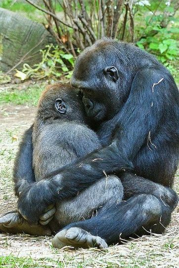 You need 12 hugs every day (creates empathy and understanding) | Empathy and Animals | Scoop.it