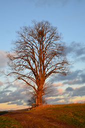 The Tree | MichellePhillipsBlog.com | Mind, Body & Spirit | Scoop.it