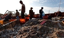 Nestlé admits slavery in Thailand while fighting child labour lawsuit in Ivory Coast | Occupational and Environment Health | Scoop.it
