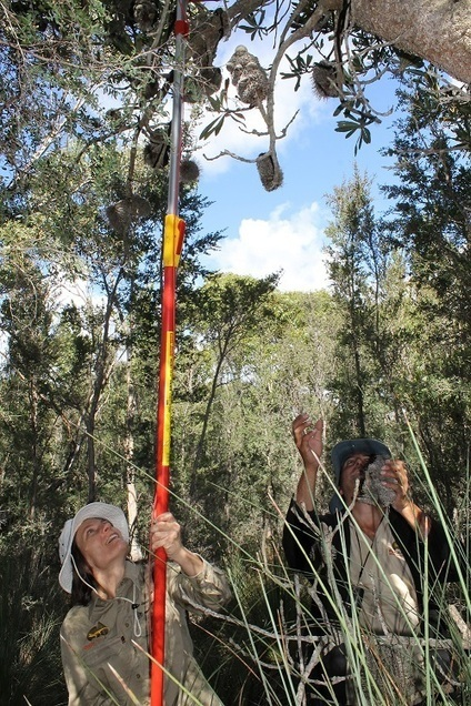 Bush Blitz seed bankers conserve iconic banksia | Australian Plants on the Web | Scoop.it