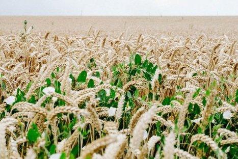 La ferme de demain, écolo et prospère, existe déjà, nous l'avons visitée | Food issues | Scoop.it