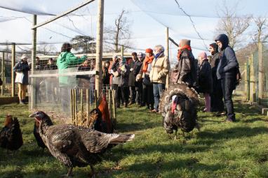 Des poules en ville, c'est possible… mais ça s'apprend | Sociétédufutur | Scoop.it