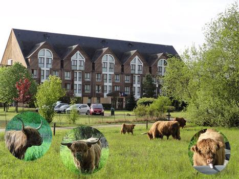 Les «Highland Cattle»  de retour au Domaine de la Forêt d'Orient | Actualités du Domaine de la Forêt d Orient | Scoop.it