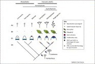 Shooting through time: new insights from transcriptomic data | Plant Genomics | Scoop.it