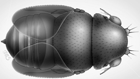 World's Tiniest Fly May Decapitate Ants, Live in their Heads | All About Ants | Scoop.it