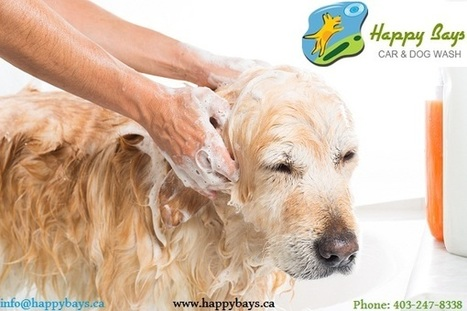 How to Take Care of your Dog in Summer | Know about Your Car Wash Services in Calgary from Happy Bays | Scoop.it