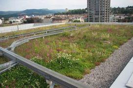 Que planter sur les toits pour favoriser la biodiversité ? | Toitures végétales & Biodiversité urbaine | Architecture et Urbanisme - L'information sur la Construction Paris - IDF & Grandes Métropoles | Scoop.it
