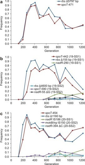 PLOS Biology: Parallel Evolutionary Dynamics of Adaptive Diversification in Escherichia coli | Science Education and Communication | Scoop.it