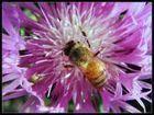 Photos Fourmis, abeilles et guêpes - notre-planete.info | Abeilles, intoxications et informations | Scoop.it