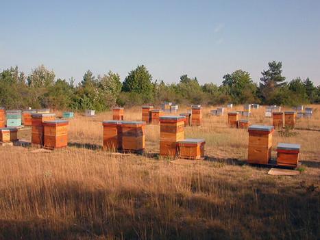 Abeilles domestiques et biodiversité: Pourquoi avoir un rucher? | Des 4 coins du monde | Scoop.it