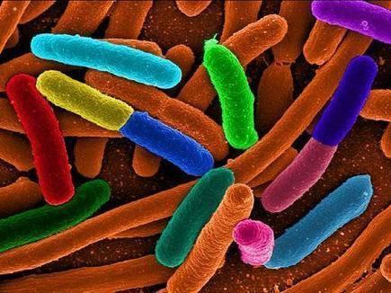 Un passo verso la vita artificiale:   <br/>il primo batterio con Dna espanso | Luna in Citt&agrave; | Scoop.it