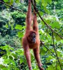 Une compagnie minière compte détruire 1,6 million d'hectares de forêts en Indonésie | jostretto | Scoop.it