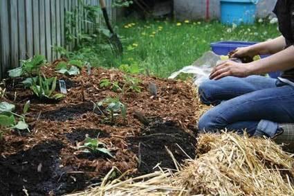 Lasagna Gardens, Perfect for Beginners! | Gardens and Gardening | Scoop.it